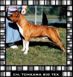 CH. Tonkawa Big Tex