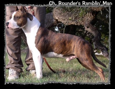 CH. Rounder's Rambling Man