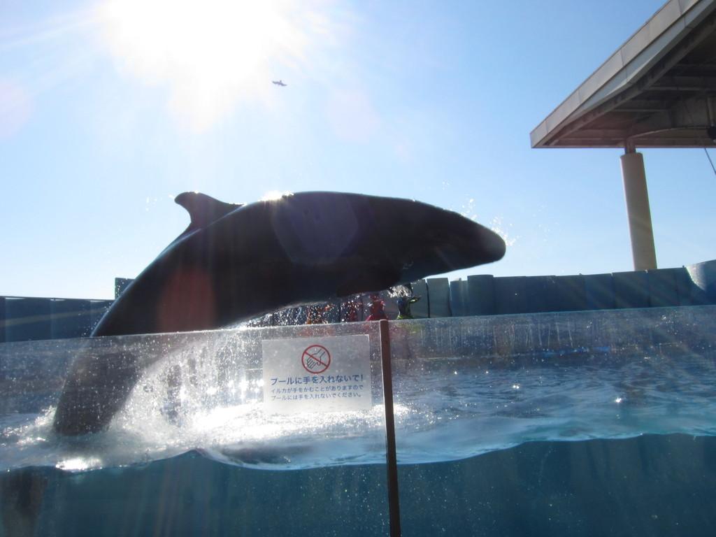 シメは最前列で見るイルカショー。水しぶきからは逃げません。
