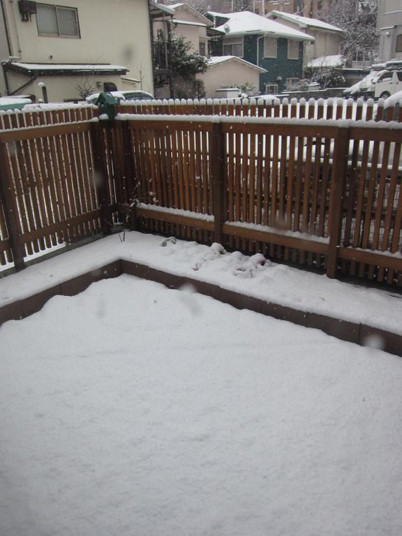 昨晩からの雪で庭が真っ白に