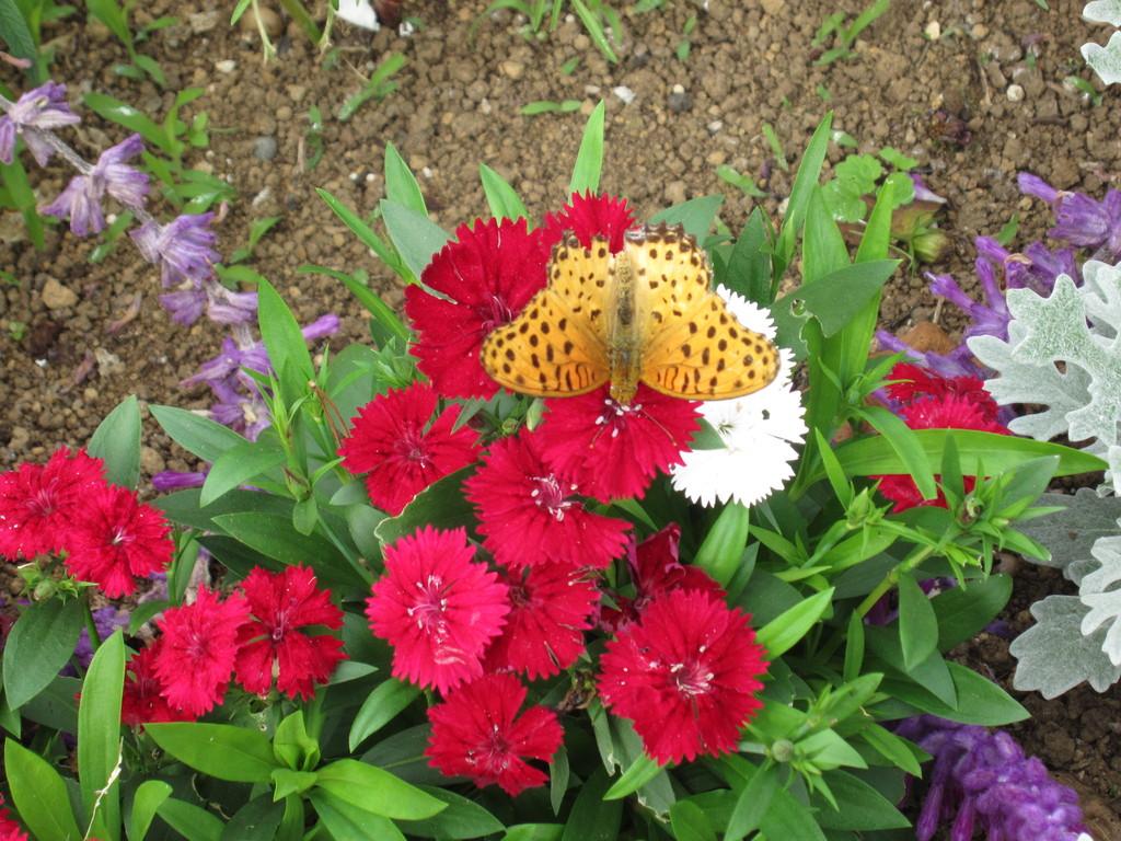 見かけた蝶も模様も秋の柄?