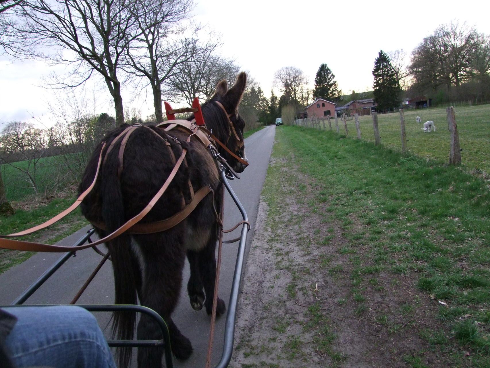 Als wir in Hamburg waren, machten wir abends noch einen kleinen Abstecher zu einer lieben Eselfreundin und kamen auf diesem Wege noch in den Genuss, eine schöne Eselkutschfahrt mit Eselwallach Valentin zu unternehmen.