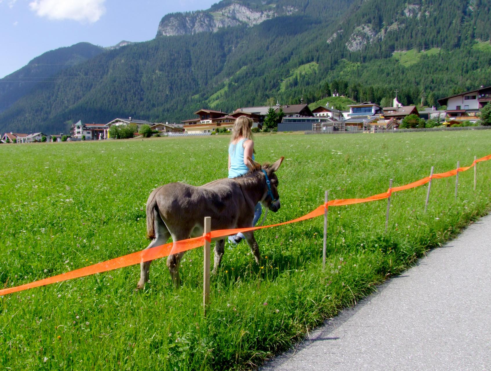 Tirol: Eine der häufigsten Anliegen, die wir trainiert haben …den Esel über eine Wiese führen, ohne dass er frisst.