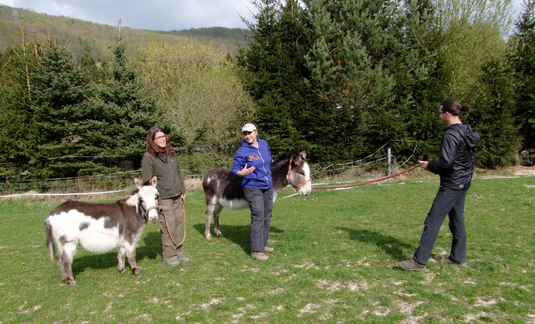 Judith erklärt, wann man wie am besten auf welcher Position den Esel führt.