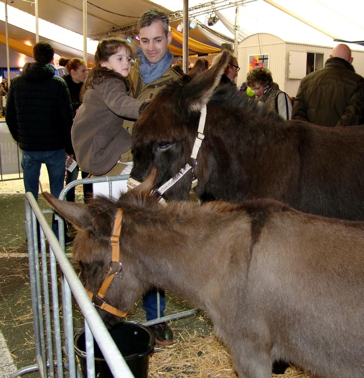 Gehandicapte Menschen finden schnell einen Zugang zu den sanften Eseln