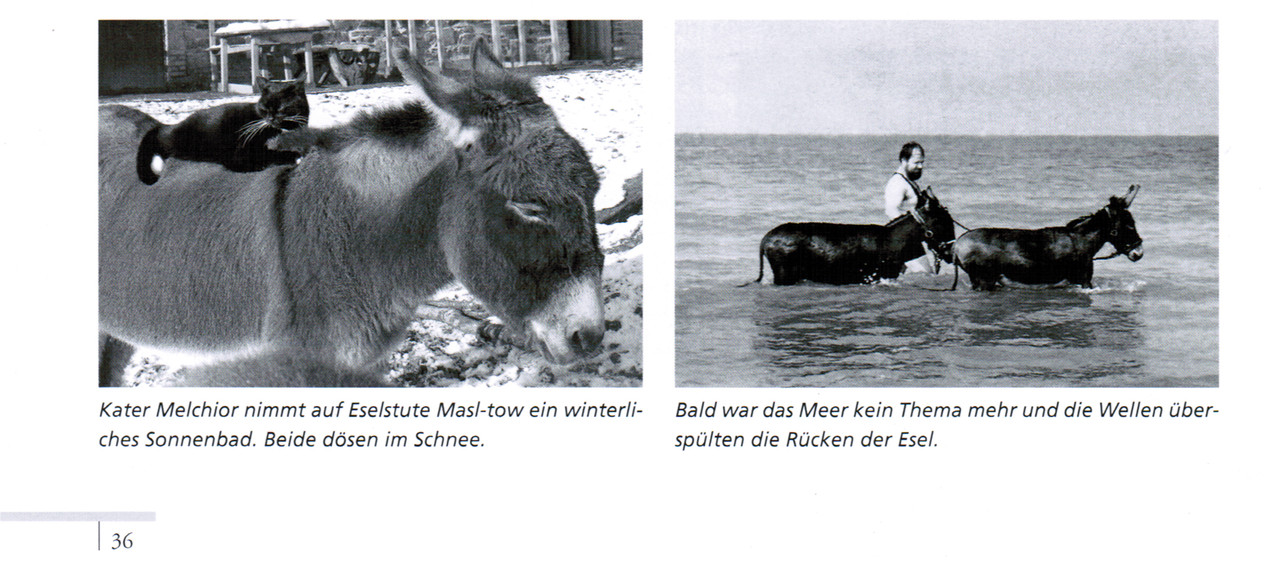 Rezension von Claudia Scharer in der Esel-Post Dezember 2012