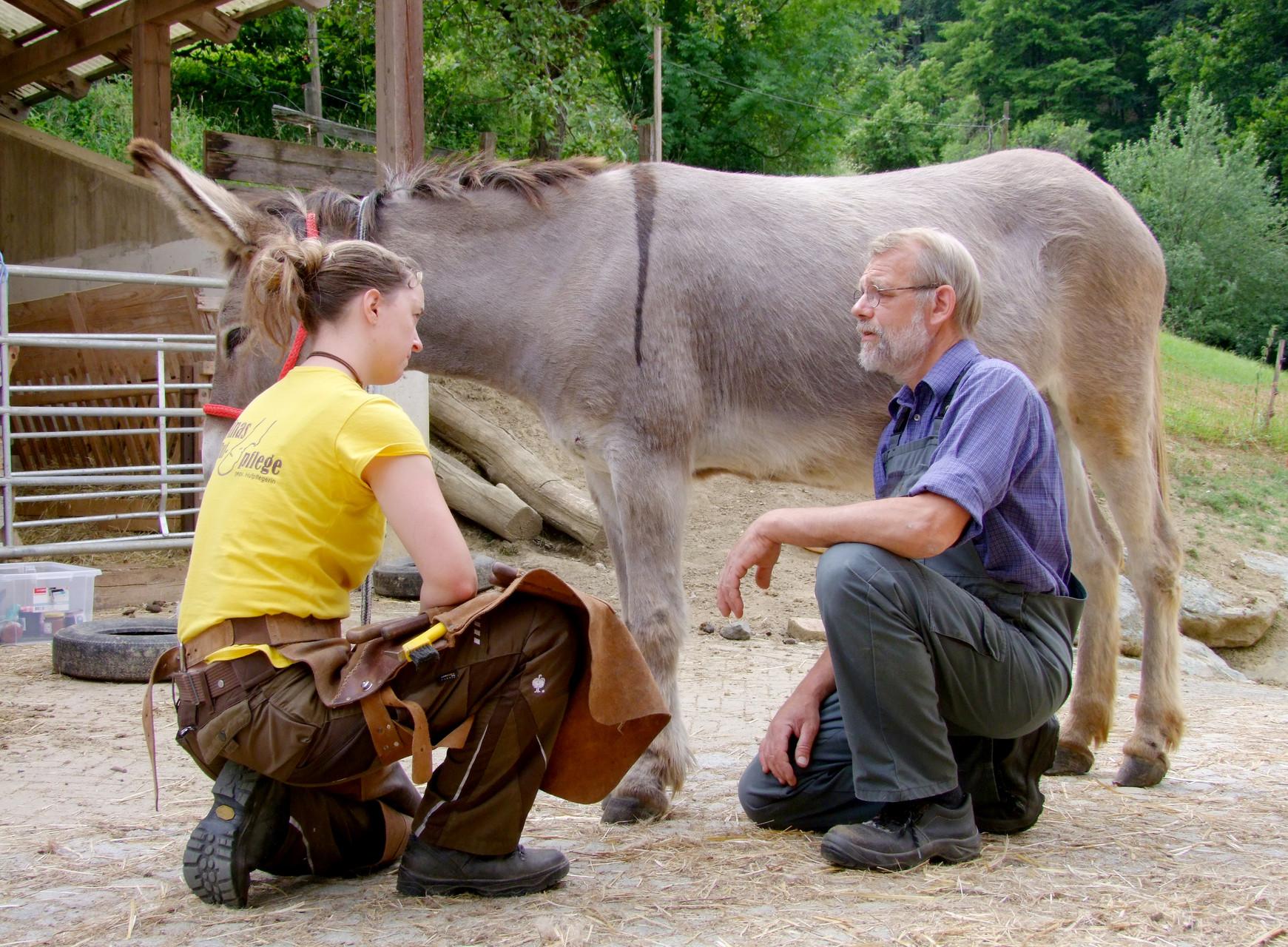 Kärnten: Die reinrassigen Provence-Esel hatten einen tadellosen Körperbau, nur die Hufe machten dem Besitzer etwas Sorge.