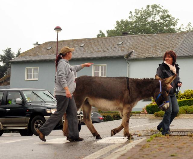 Judith Schmidt erklärt, wie man einen Esel im Straßenverkehr richtig führt. Foto: Alexandra Evang