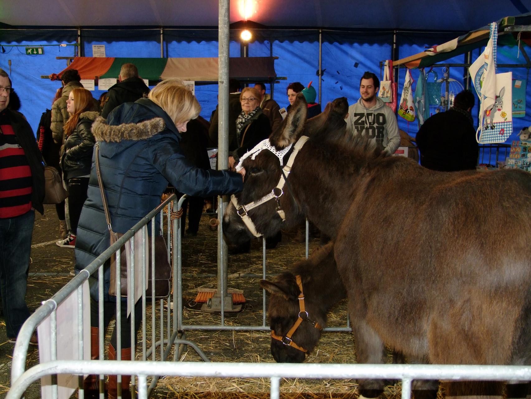 Besucher freuen sich über die Esel