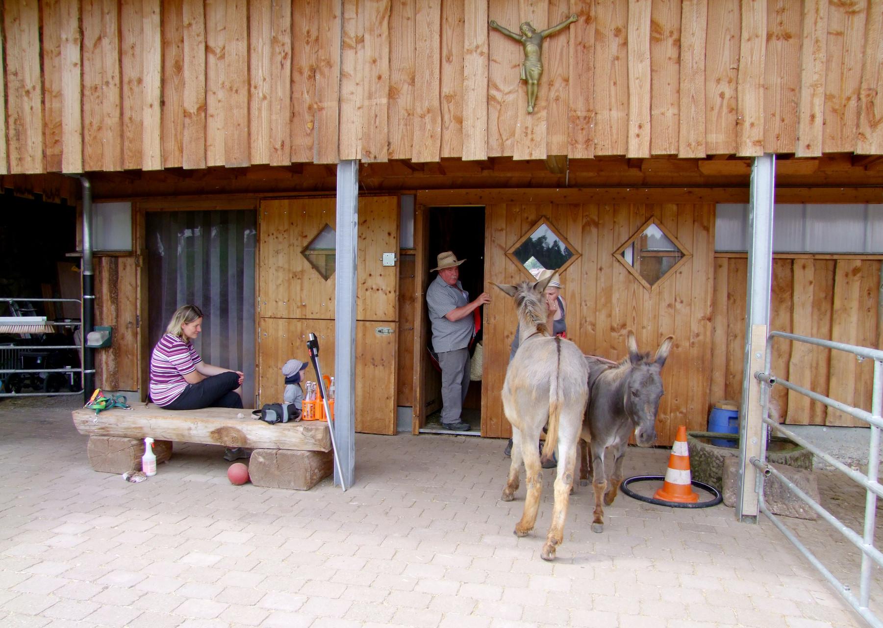 Auf der Heimreise Nähe Bodensee: Einige Esel lebten auf einer wunderschönen Anlage, die keine Wünsche mehr offen ließ.
