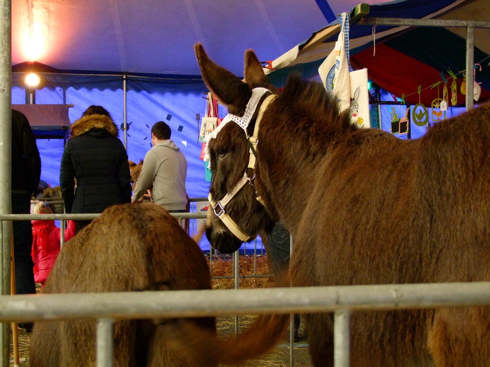 Le Chaim ist das erste mal auf dem Eselmarkt