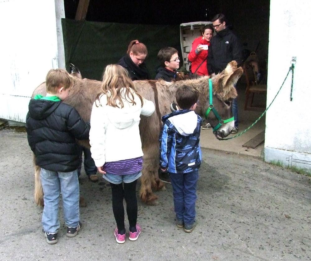 2013: Kinder lieben es, den Abraham mit seinem wuscheligen Fell zu bürsten.