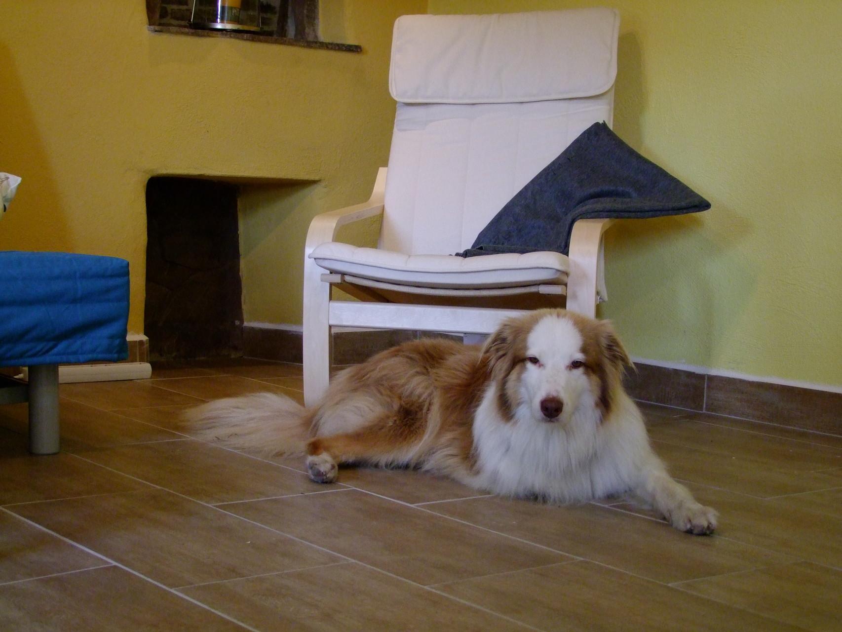 Das untere Appartement: Hunde sind willkommen