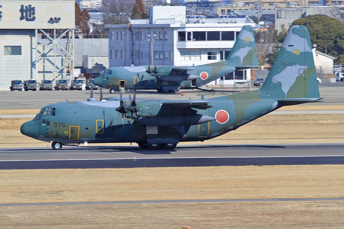 Japanische Hercules gibt´s in zwei Farbvarianten, camouflage und...