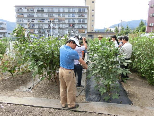 オクラ 空芯菜 モロヘイヤ ベトナムでも作ってまーす  空芯菜の葉っぱもっと小さいねん(もちろんベトナム語ですけど)