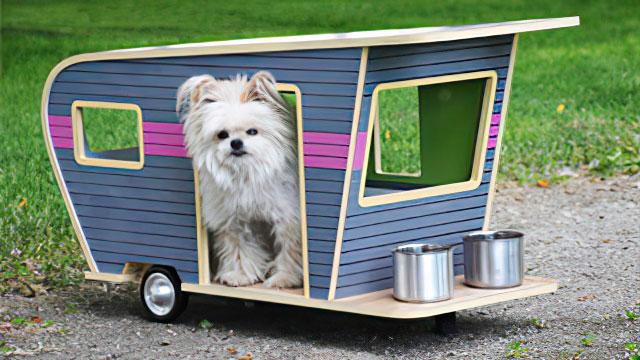 Perro dentro de caravana