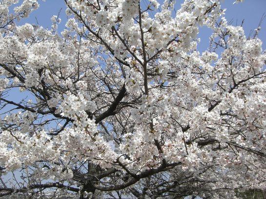 春の桜が見どころです