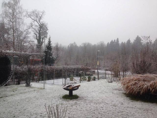 Der Schnee schaffte es am Dienstag (14.1.2014) bis herunter ins Rheintal