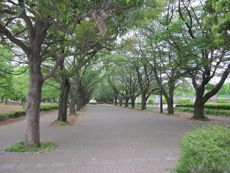 公園を散歩してみませんか?