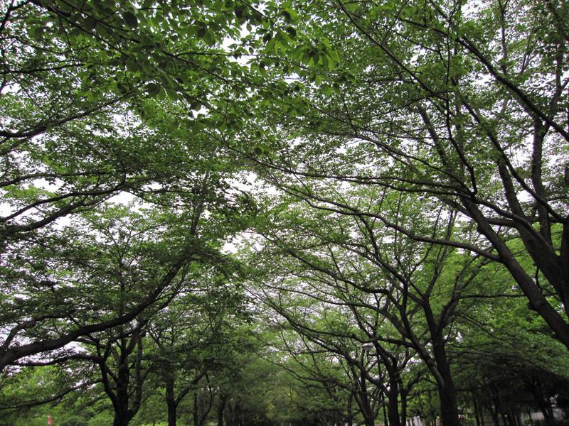 春の公園、葉のいろが若くて美しく、風がとても爽やかです