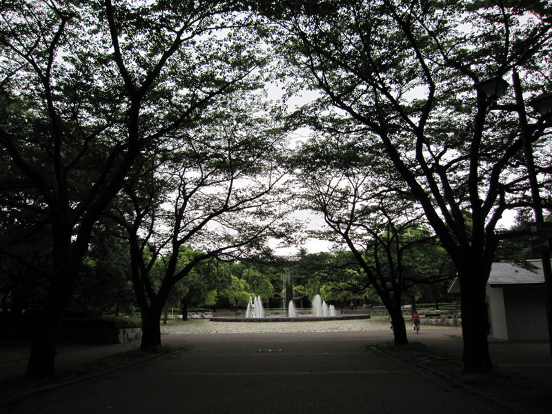 これは、櫻並木、時期がきたら櫻であふれます