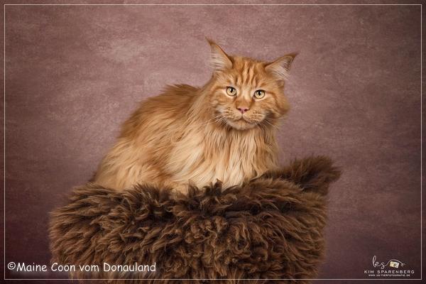 Simba hatte wieder ein Fotoshooting, ein sehr talentiertes Model :)