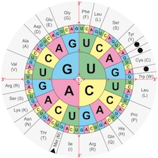 genetische code