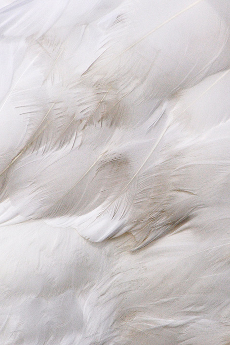 Tout de blanc vêtu