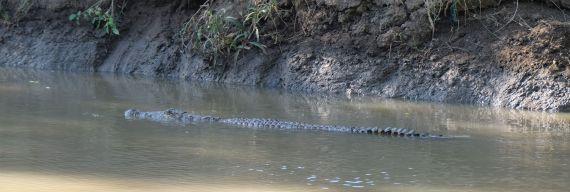 unser 1. Krokodil