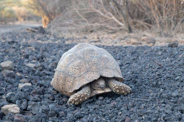 Am Wegesrand kann man im Awassa Nationalpark einiges entdecken