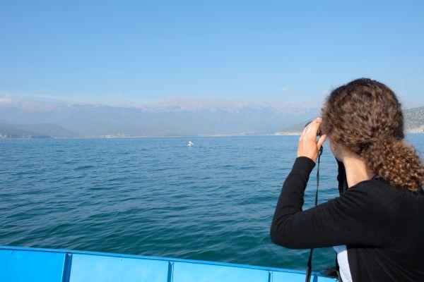 Der Prespa See ist zu Hause für unzählige Pelikane und andere Vögel