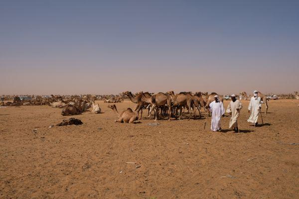 es war so schön zu sehen, dass die  sudanesen Ihre Kamele mit Respekt behandeln...