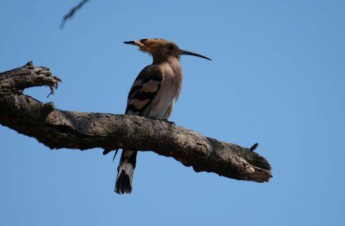 ...und unzählige Vögel