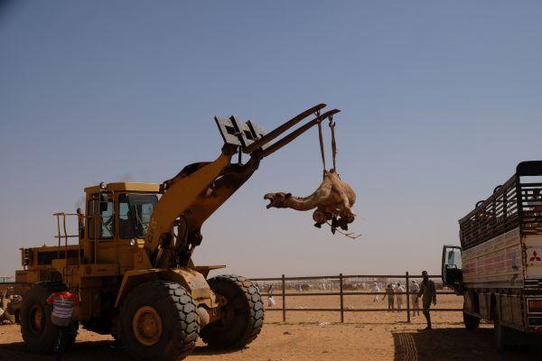 kamel markt in der NÄhe von Omdurman