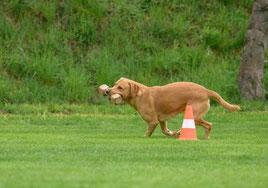 Pamino rennt um die Pylone