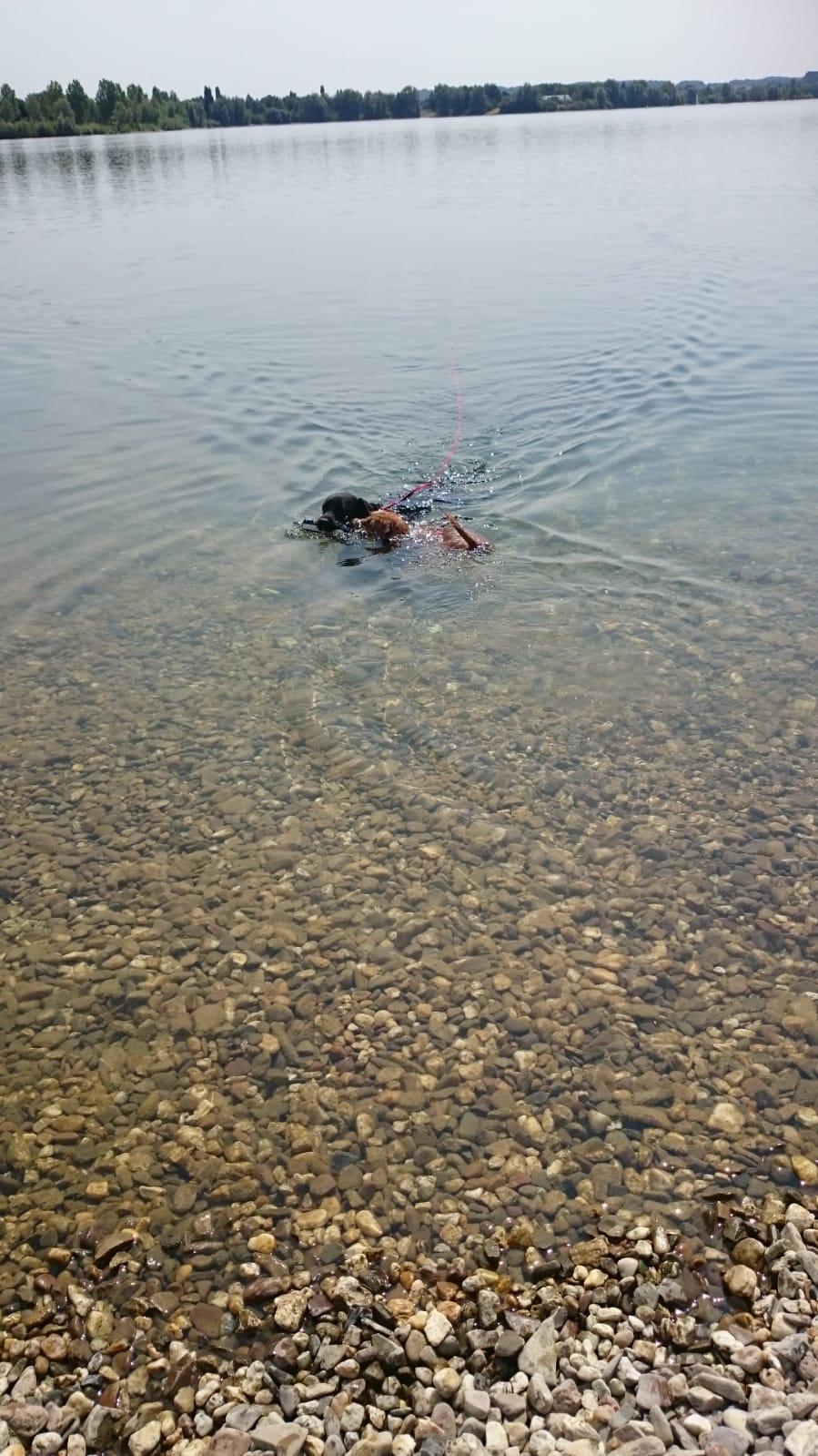 Mit Konrad schwimmen