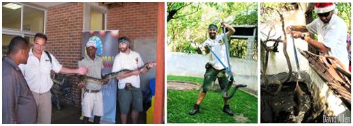 Snake handling in South Africa