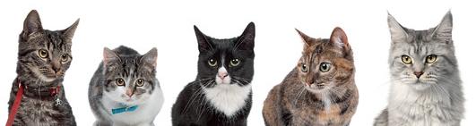 futter-check für katzen