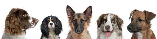 futter-check für hunde