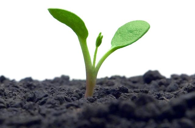 Konschak - ein neues IT- Projet in Form einer kleinen Pflanze