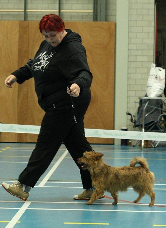 Imladris von den Grauen Anfurten >Coco<   - Beste Pup