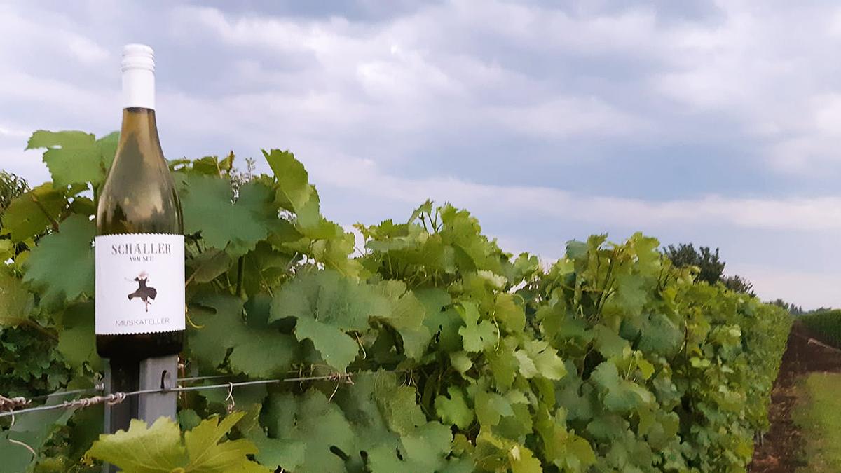 Weingut Schaller