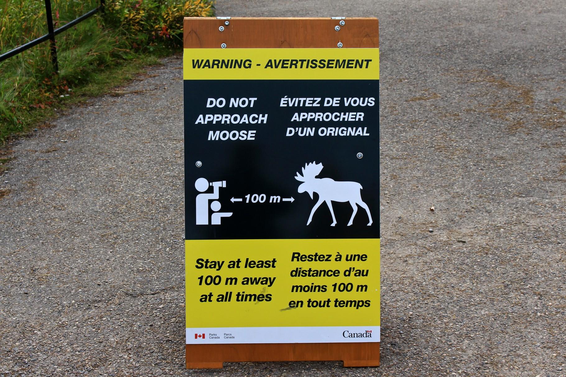 Sicherheitshinweis Elk Wapiti