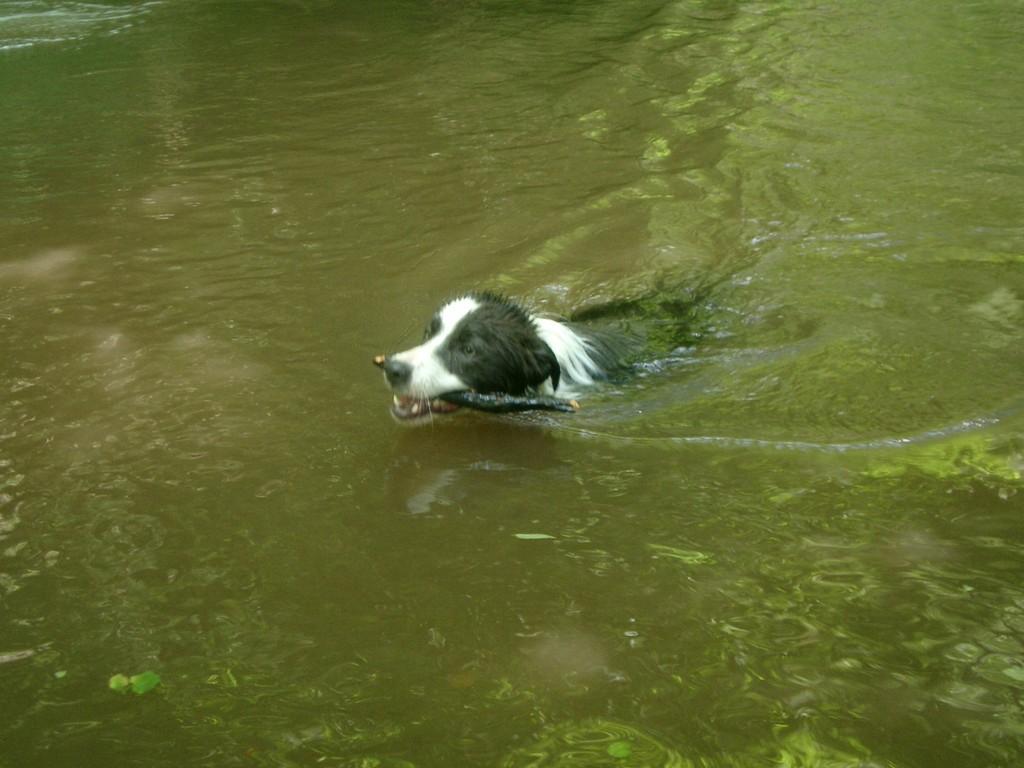 schwimmen ist so schön