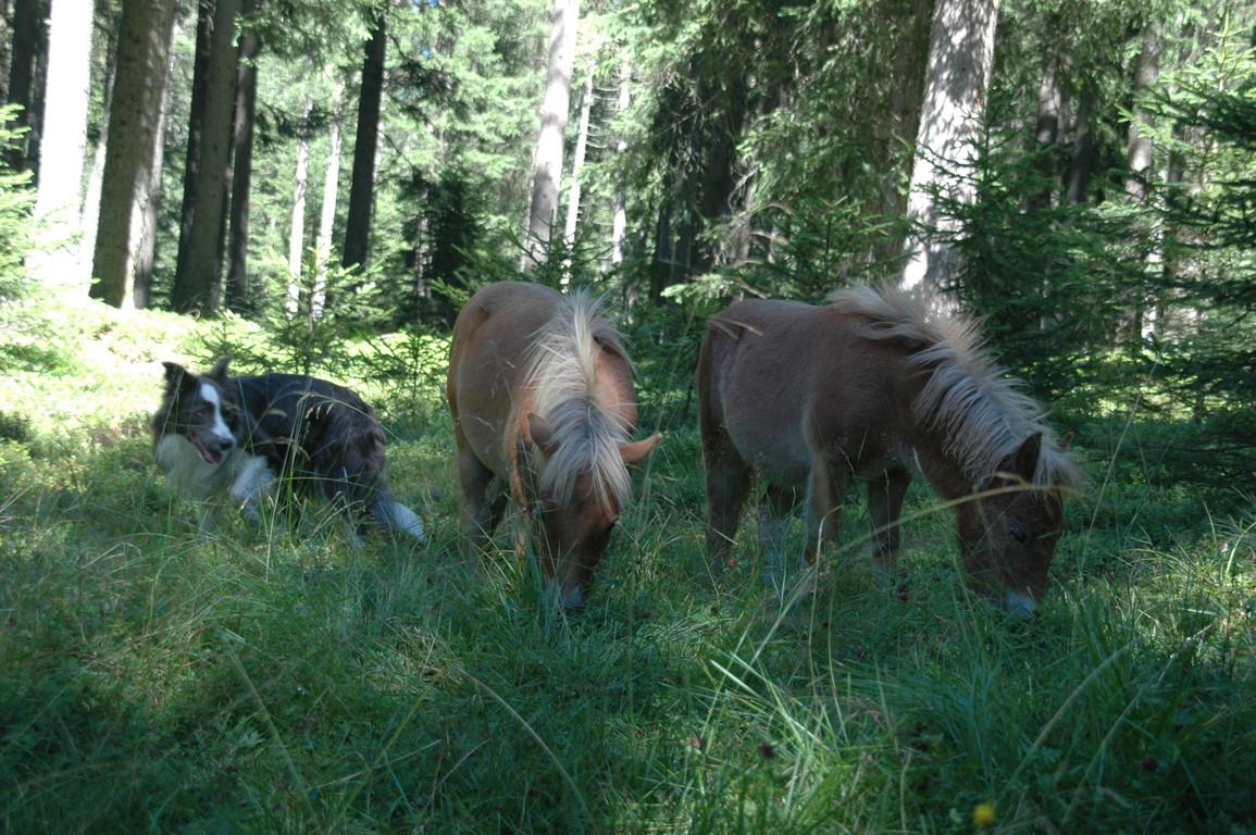 mit Pony's