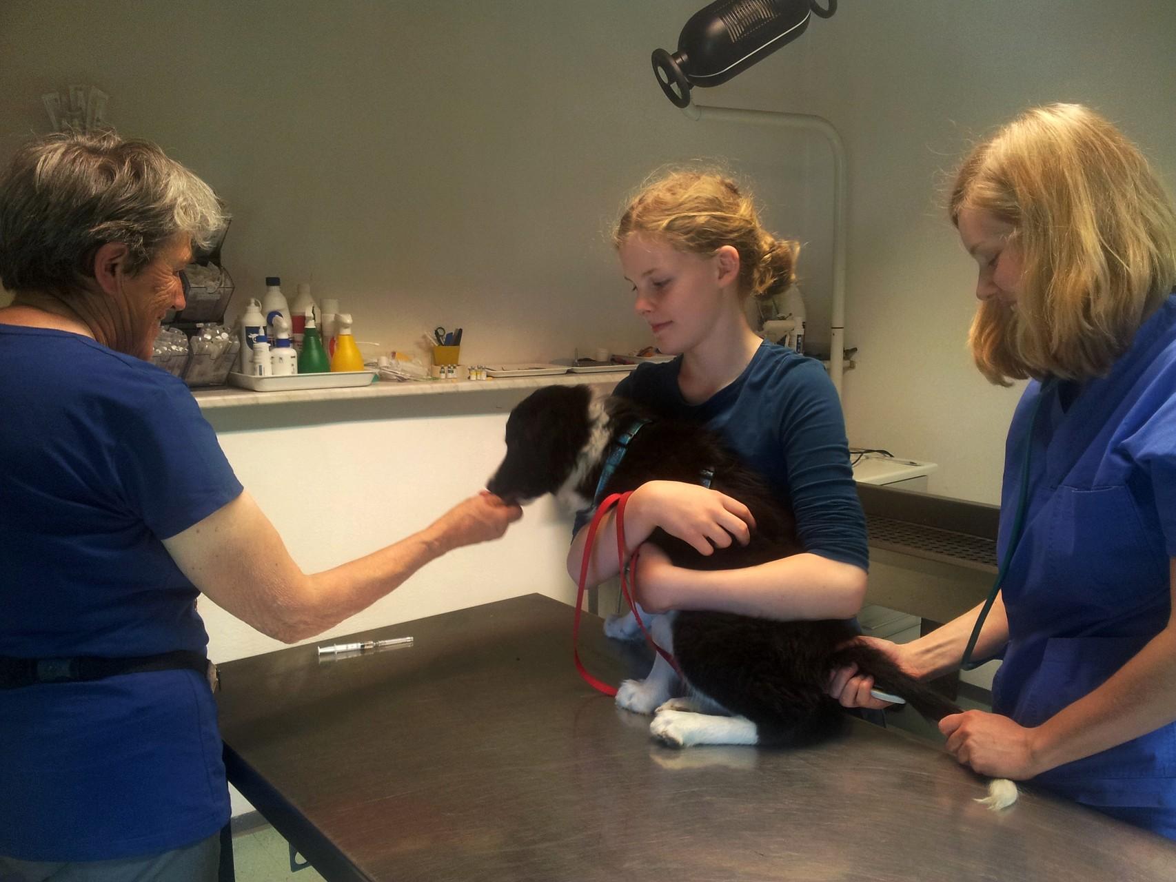 2. Untersuchung beim Tierarzt