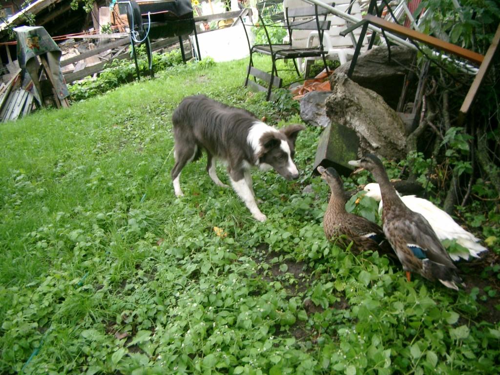 erste Bekanntschaft mit Enten