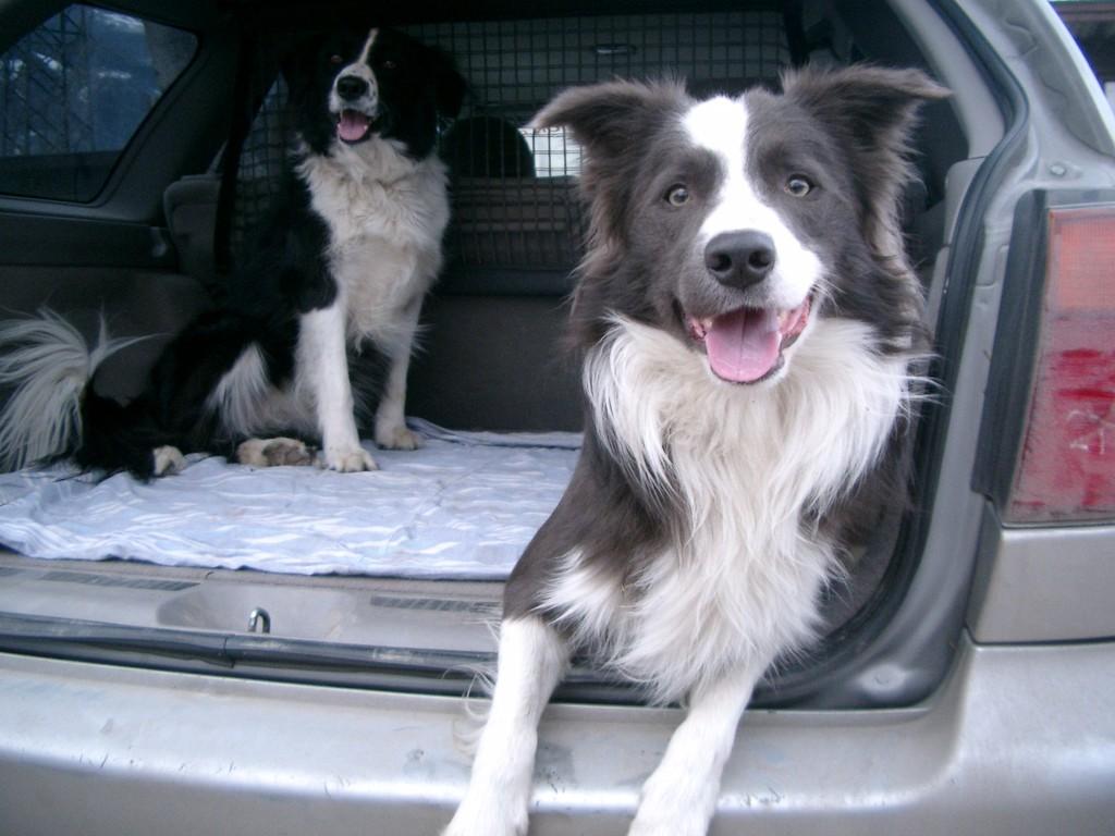 mit Kelly im Auto