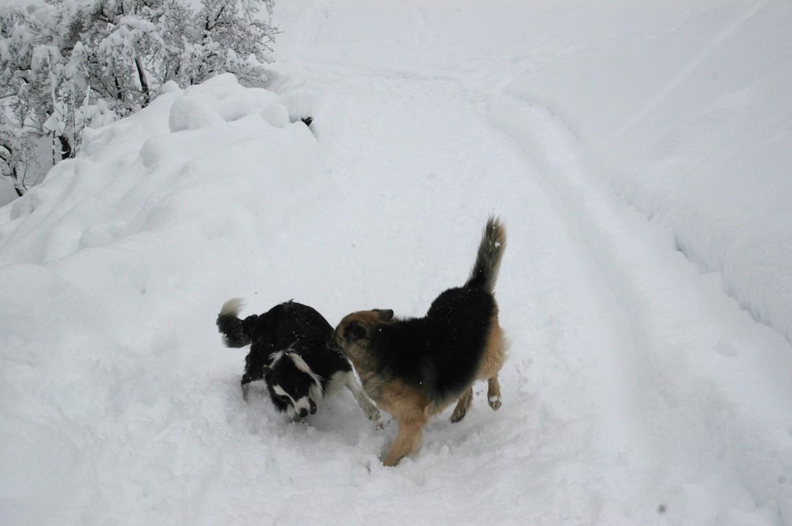 spielereien im Schnee