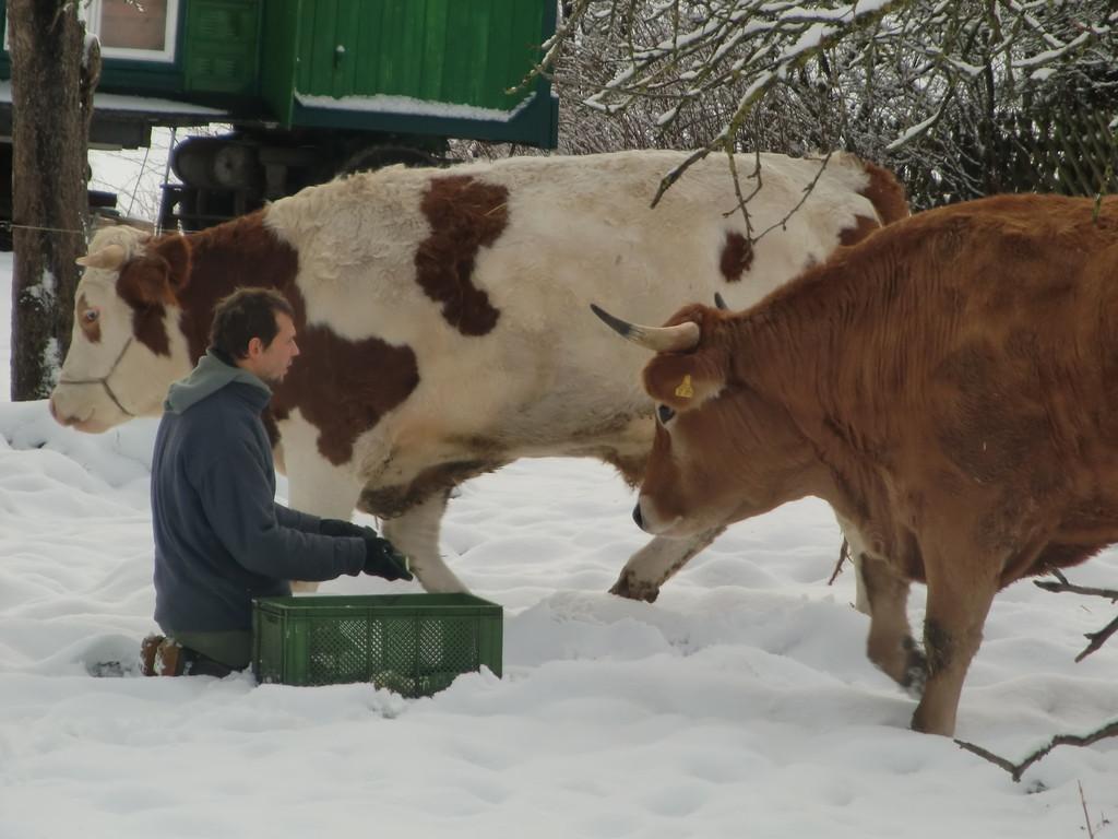 Syam sass schon im Schnee mit Karotten und Gurken...